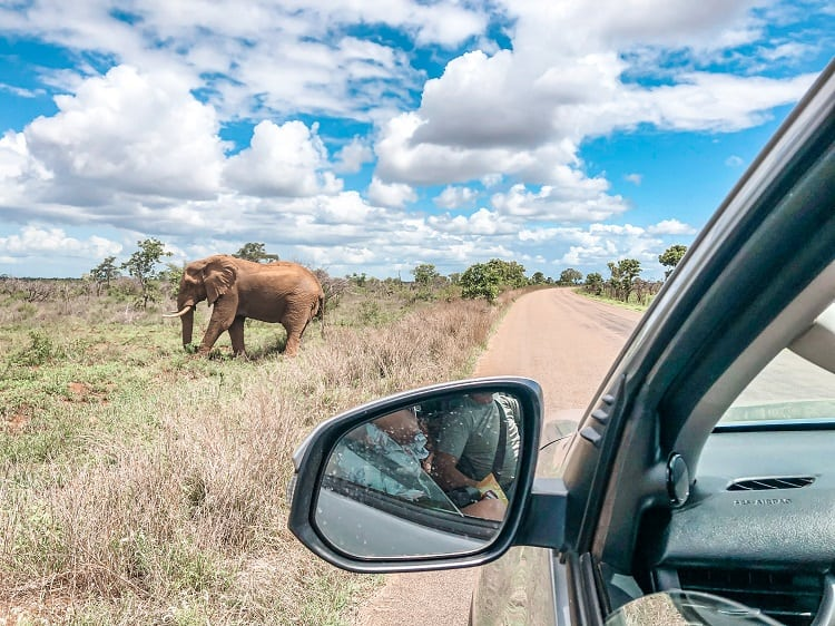 SELF-DRIVE SAFARI IN KRUGER NATIONAL PARK, SOUTH AFRICA