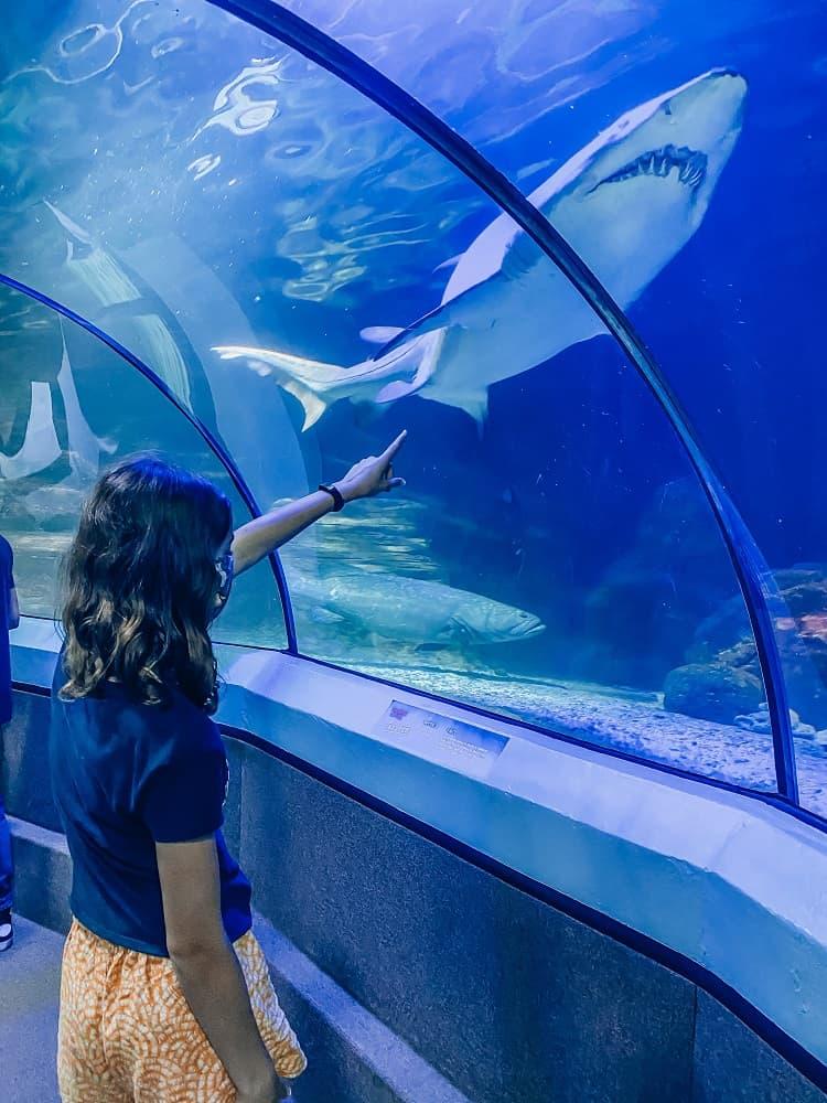 Sealife Mooloolaba - Things to do on the Sunshine Coast with Children