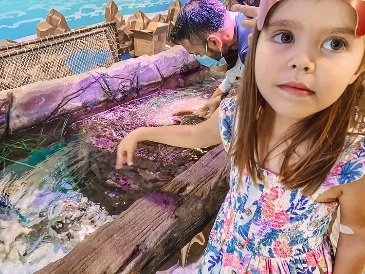 Sealife Mooloolaba - Things to do on the Sunshine Coast with Kids