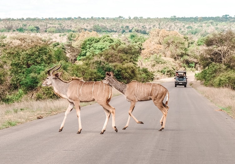 What to do in Kruger National Park