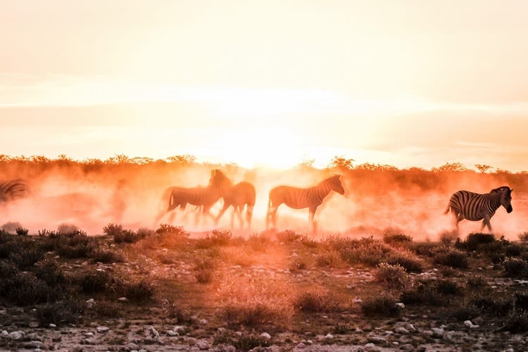 Sunset in Etosha with Family - Travel Namibia with Children