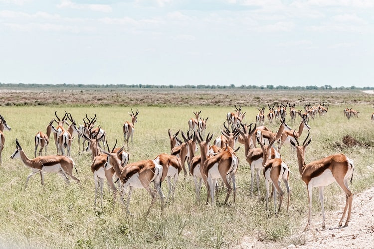 Things to do in Etosha with Kids
