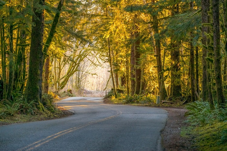 Road Trip in Hoh Rain Forest in Olympic National Park in Washington U.S.