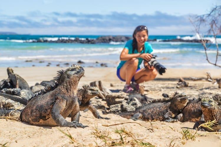Galapagos Islands of famous marine iguanas
