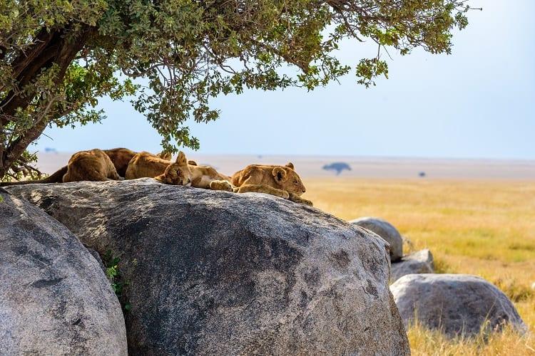 Serengeti National Park Tanziania