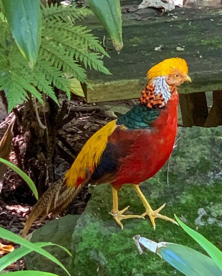 Currumbin Wildlife Sanctuary with Kids - Birds