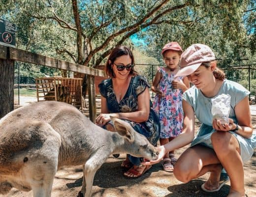 What to do Whilst at Broadbeach - Currumbin Wildlife Sanctuary