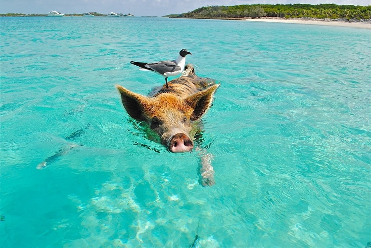 7 Fun Activities to do in the Caribbean With Kids - Pig in the Bahamas