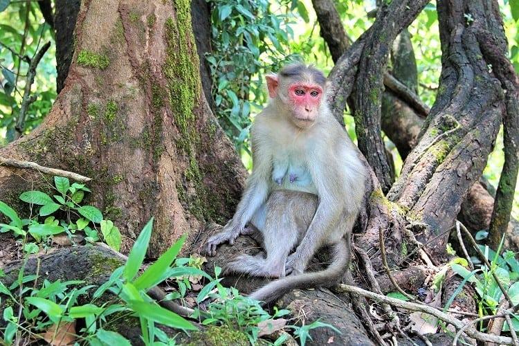 Bhagwan Mahavir Wildlife Sanctuary, Goa India with Family