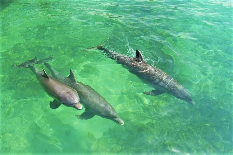 India dolphin watching, What to do in Goa with Kids, India