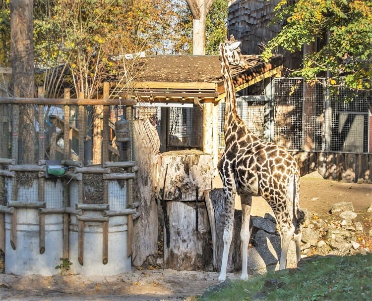 Riga Zoo with Kids - Latvia with Kids- top family attraction in the Baltics